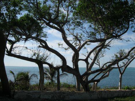 Banyan Tree, Abaco