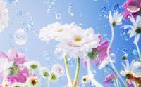 Kvetiny 2