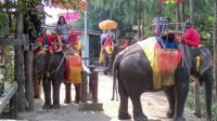 Elephant riding is still very popular in the Asian Countries