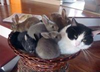 kitty and bowlful of bunbuns.