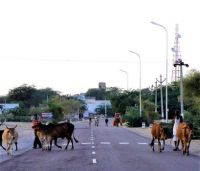 On The Road, Bikaner, India