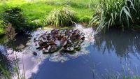 Rybníček s lekníny