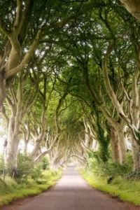 Bregagh Road, Ballymoney, Ireland by Kanbron