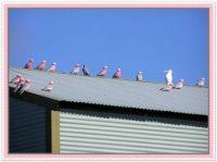 Galahs on a hot tin roof. . .