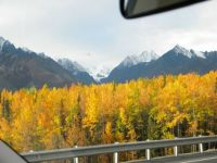Alaska's seasonal gold