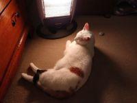Lily the cat stories 394 - Brrrr it's cold