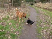 Series Dogs in the Park. Bambi meets Norman.  'Now come on then'