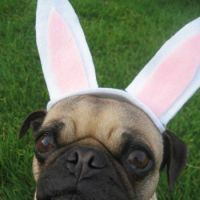 "CUTE DOGGY SAYS...""HAPPY EASTER JIGIDI PEEPS..."