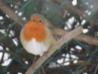 The Robin doesn't look happy