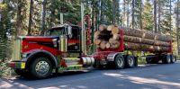 Logging_01