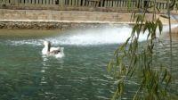 Water Enjoyment