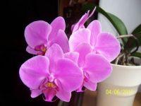 A special flower for Maegi