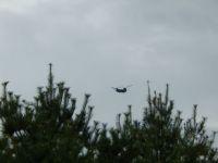 Shinook above the tree line