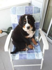 What do you mean ... your chair??