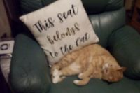 Shopping today, didnt need a cushion,  but this was one i couldnt refuse.