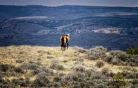 Wild Horses.Sand Wash Basin's Picasso Colorado