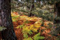 beginning of autumn where I live
