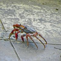 (24) helpful fellow on the floor in Christiansted water-front restaurant, St. Croix,