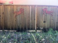 horses on the fence