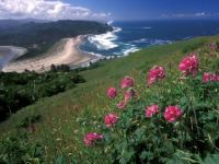 Cascade Head OR