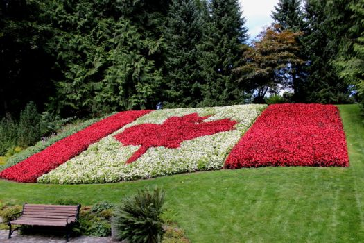 CANADIAN FLAG made from Pegonias