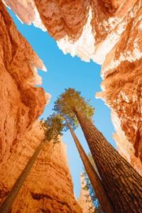 The Douglas firs of Bryce Canyon; a perfect metaphor for perseverance.