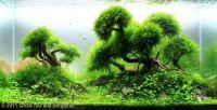 Aquarium mosses