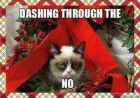 Angry Xmas Cat