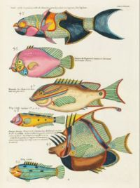 Six Fish Justa Swimming in the Sea