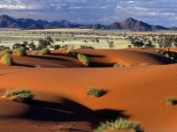 Namib delight