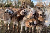 Donkey feedin' time by Jenny Boyd