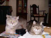 Millie & Madison