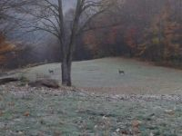 fog and deer