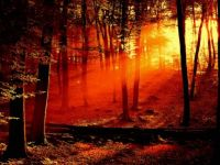 Sunrise in the Forest  All Free Download