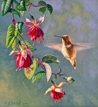 'Hummingbirds'