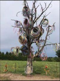 The elusive hula-hoop tree in flower, found in Amber, Iowa