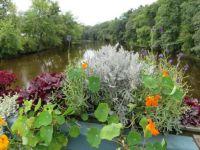 Scene from the Flower Bridge