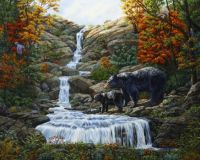 black-bear-falls-with-baby-dpw