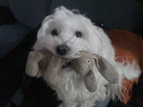 Timothy and Bunny