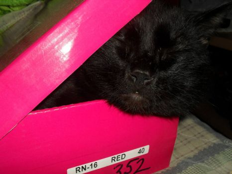 Tzille having a nap in the box