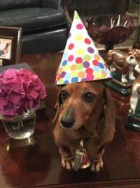Poppy Turns 10 Today!  Happy Birthday, Sweet Baby Girl!!!