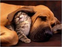 the cat is in the dog's ear