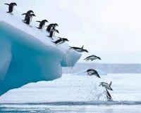 Penguin Dive (Fun-Size)