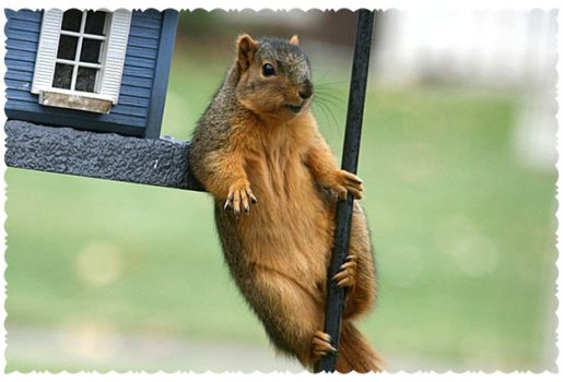 Write a Caption!  squirrel hang