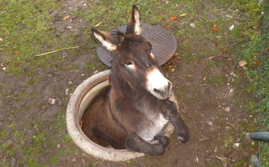 Donkey in a fix