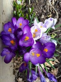 Finally! Signs of Spring!
