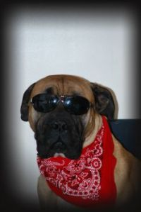 Harley- The cool DAWG
