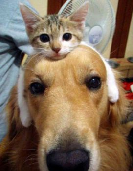 Cats as hats 2