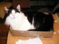 Brandee box