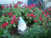 Gnome with impatiens